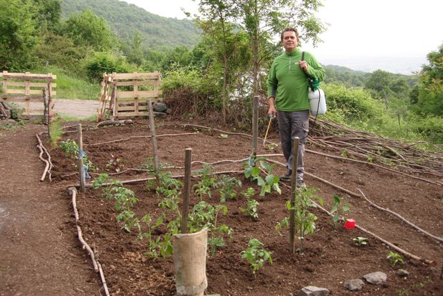 Arroser et jardiner - Piquet de tomate ...
